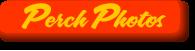 Chartom-button-perch