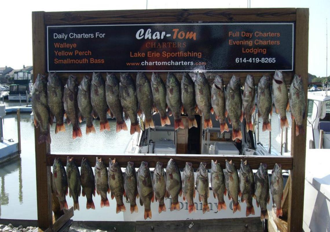 chartom-charters-fishy